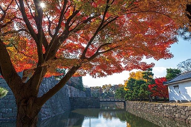 城だからこそ観られる美しい秋景色が広がる