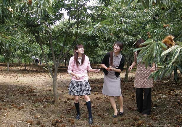8種の焼き栗と出会える栗狩りスポット/福田グリーン農園 (茨城・土浦)