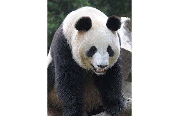 """2月21日(月)23時40分頃、上野動物園に待望のパンダ2頭が到着! 約3年ぶりとなる""""上野のパンダ""""到着の瞬間には、一帯が歓迎ムードに包まれた"""