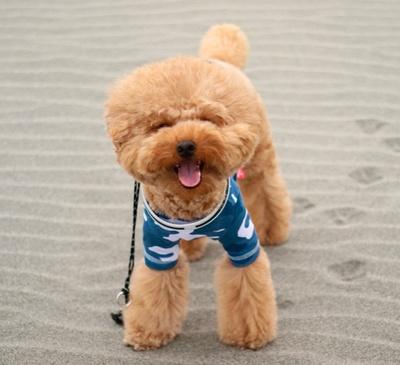 砂浜をお散歩!足跡がまたかわいい...