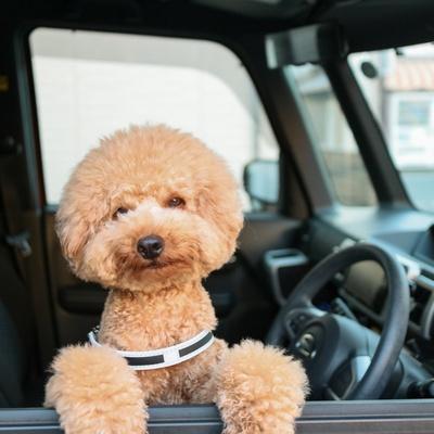 チャーリー君が運転してくれるの!?