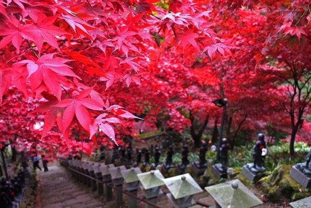 石段に沿って燃えるように紅葉が広がる