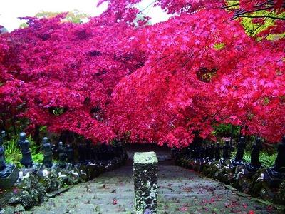 大山寺・大山阿夫利神社(神奈川県伊勢原市)