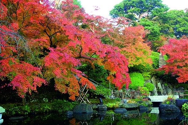 水面に映る紅葉の姿が幻想的