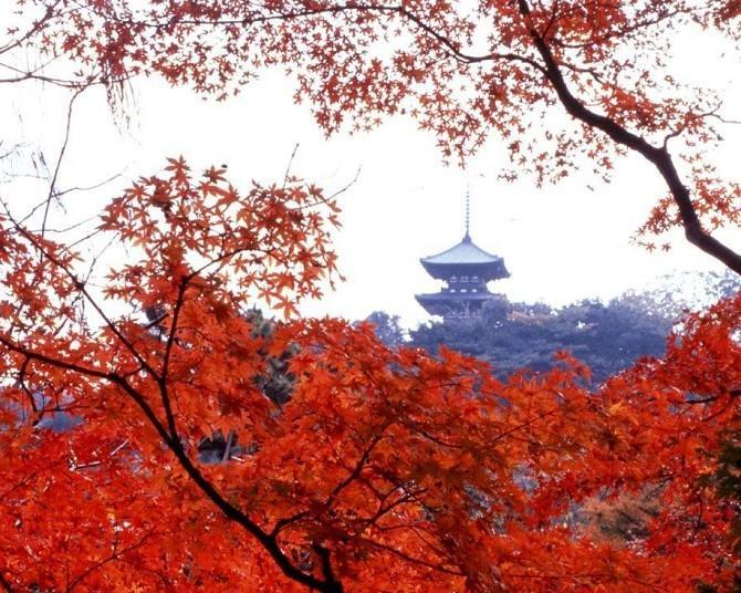 神奈川のおすすめ紅葉スポット5選!風情ある町並みと紅葉のコントラストを堪能