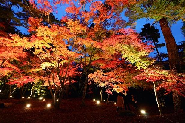 天然記念物の岩畳と紅葉のコラボ