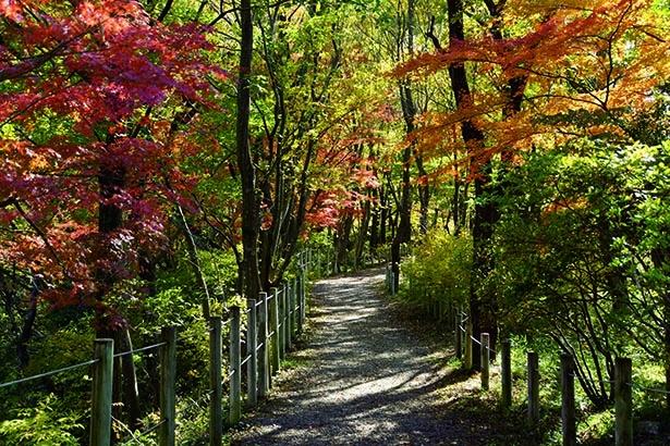 与謝野晶子歌碑へ向かう遊歩道