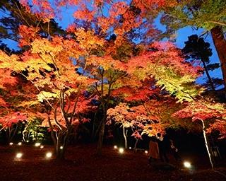 埼玉のおすすめ紅葉スポット5選!豊かな自然を彩る紅葉を見に行こう