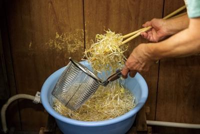 モヤシを桶で水にさらす / 宝来ラーメン
