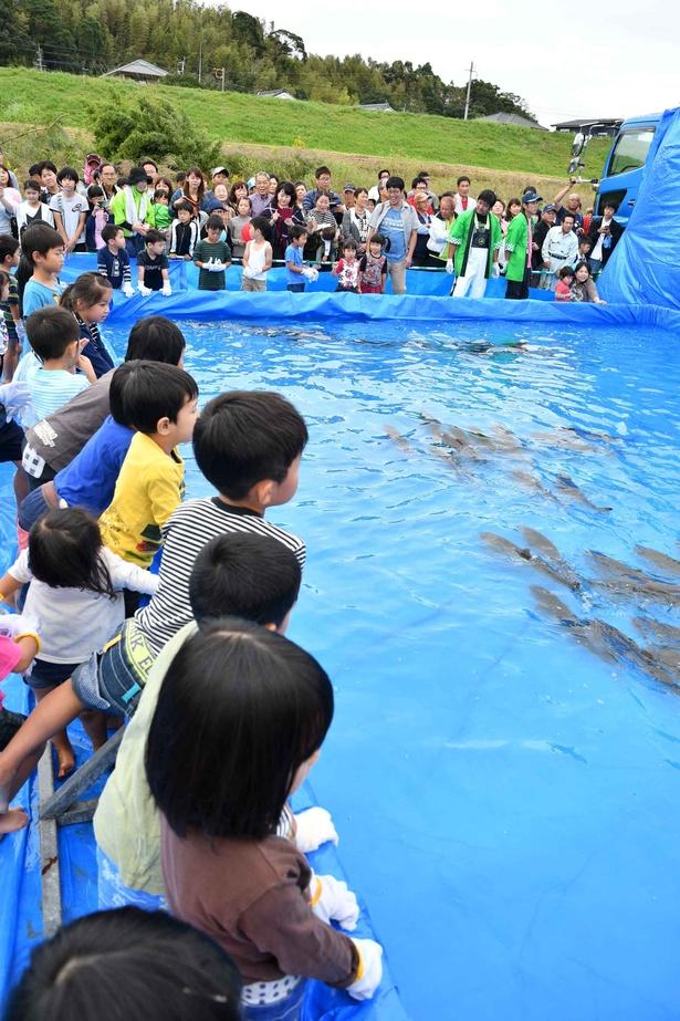 まつりの人気イベントのひとつ「魚のつかみ取り大会」
