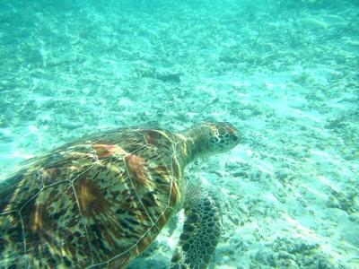 カヤックの底に広がるのは天然の水族館。ウミガメを見つけたときには否応なくテンションが上がります!