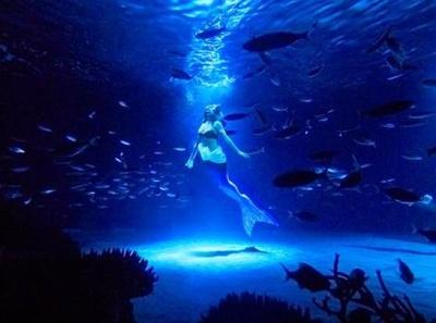 人魚に扮したダイバーが魚たちとパフォーマンスする「トワイライトラグーン」