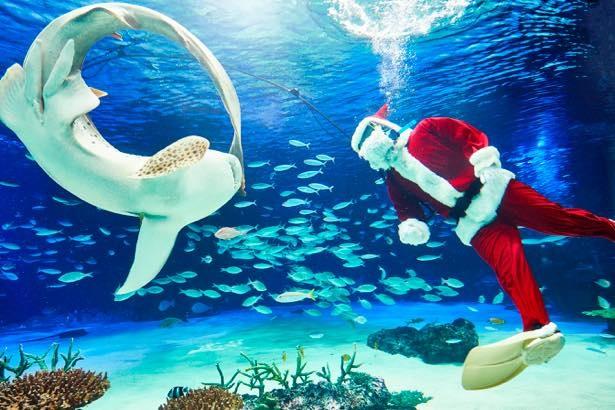大水槽「サンシャインラグーン」に、 サンタに扮したダイバーが登場する「サンタダイブ」