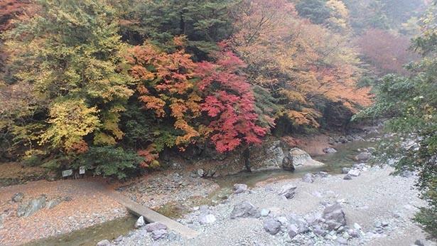 乙女河原の紅葉の様子