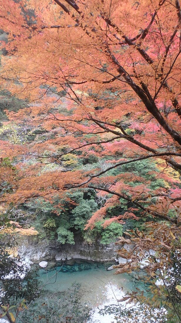 【写真を見る】例年キレイに色づく荒男谷の紅葉