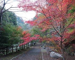 阿讃山脈の山懐に抱かれた塩江温泉郷の紅葉が見ごろ