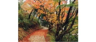 紅葉と絶壁とのコントラストを楽しむ / 立神峡