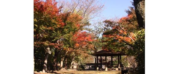 熊本100景認定の岩山を紅葉が彩る / 舞鶴城公園