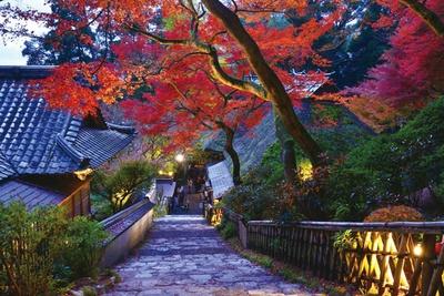 幻想的な空間の中で、紅葉を観賞しよう / DAIKOUZENJI ライトアップ「契山の灯り物語」