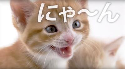 「CV部」#7 猫とうさぎ(CV:竹達彩奈)
