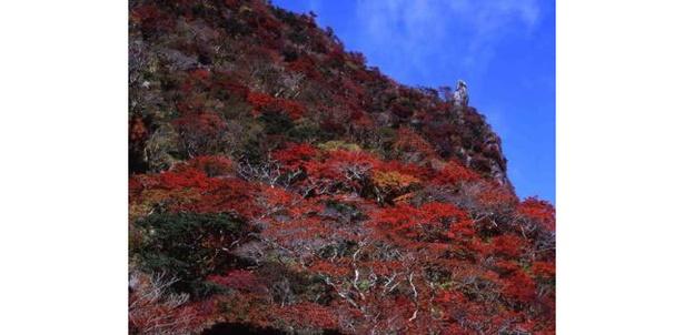雲仙 / 国の天然記念物にも指定されている色鮮やかな紅葉 画像提供:雲仙温泉観光協会