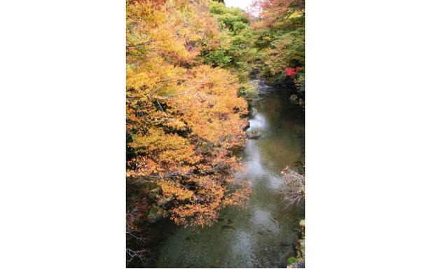 五ヶ瀬渓谷 / 白滝周辺の原生林が美しく色づく