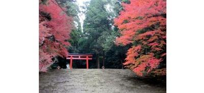 霧島(霧島神宮) / 鳥居へと続く道を真っ赤な紅葉が彩る