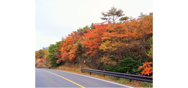 県道1号線(丸尾・大浪池登山口) / ドライブしながら秋の霧島を感じることができる