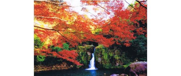 (C)観音滝公園