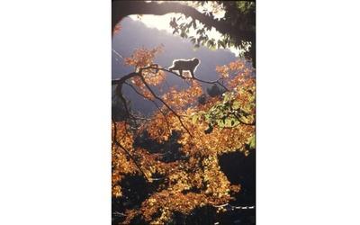 色付く自然の中で野生のニホンザルに会える / 高崎山自然動物園
