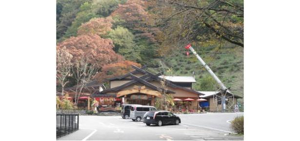 日本最大級の人道大吊橋からの景色が人気 / 九酔渓の紅葉情報