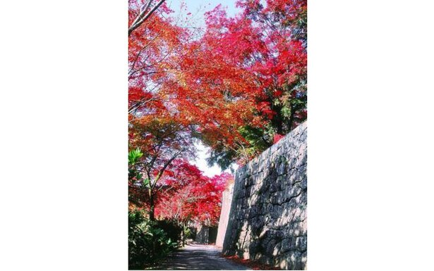 荒城の月の名所・竹田の岡城跡 / 竹田(岡城跡)