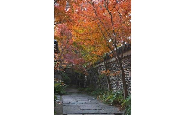 都会のオアシスの中で美しく色づく紅葉 / 楽水園