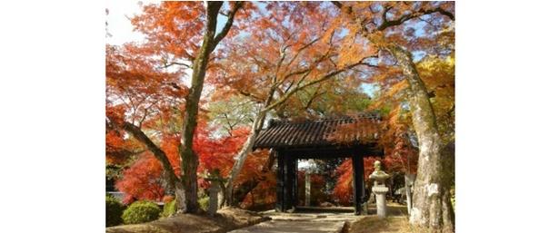 秋に輝く筑前の小京都 / 秋月城跡周辺