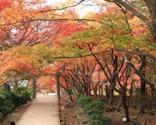 九州の紅葉名所!福岡で11月中旬~12月上旬が見頃の紅葉情報まとめ