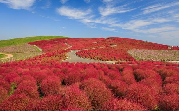 魅力度47都道府県ランキングの47位は7年連続で茨城県