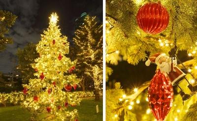 フォトスポットとして人気の本物のもみの木を使ったツリーも飾られる