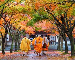 【紅葉・見ごろ】呑山観音寺 /  四国八十八カ所を巡りながら紅葉を満喫