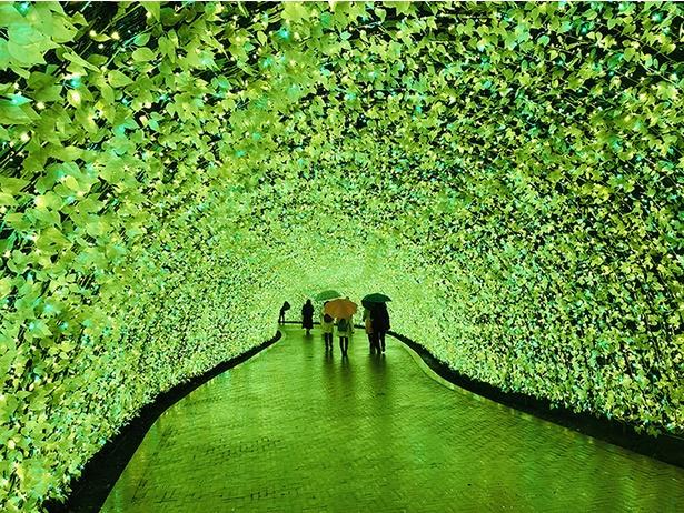 LEDがグリーンから黄色にゆっくり変わり、春の訪れを感じさせるトンネル