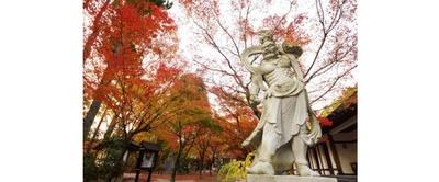 多種多様の木々が境内や参道を真っ赤に染める / 呑山観音寺