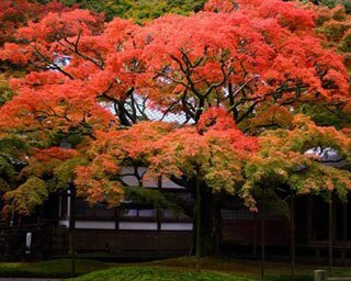 九州の紅葉名所!福岡で11月上旬~11月下旬が見頃の紅葉情報まとめ