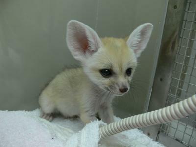 大きな耳とつぶらな瞳がかわいい