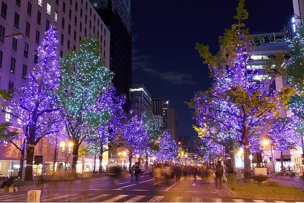 【写真を見る】全ての樹木が煌めく新演出が楽しめる本町周辺/御堂筋イルミネーション2019