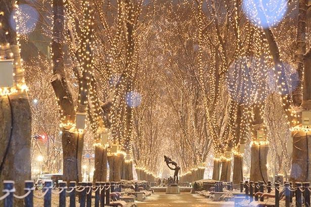 【写真を見る】あたたかな光に包まれる定禅寺通を歩こう