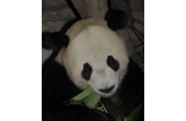 「上野動物園」「多摩動物公園」「葛西臨海水族園」「井の頭自然文化園」が、3月17日(木)より無期限休園へ