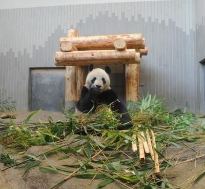 【写真】公開予定だった2頭のパンダ画像10点