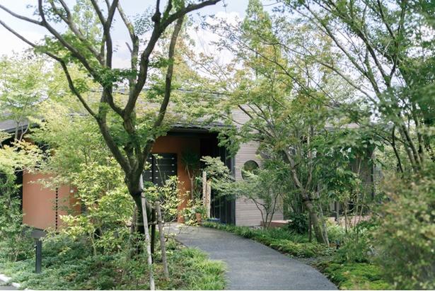 農のオーベルジュ 白金の森 / 山を切り拓いた5haの敷地は緑がいっぱい