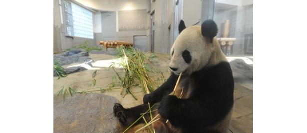 上野動物園のパンダを早く見たい!