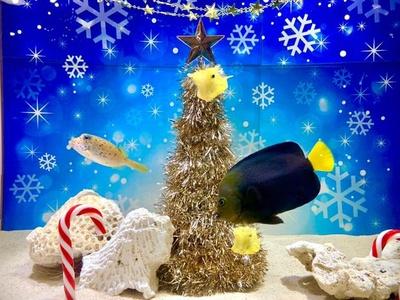 「海の中のクリスマス水槽」の特別展示