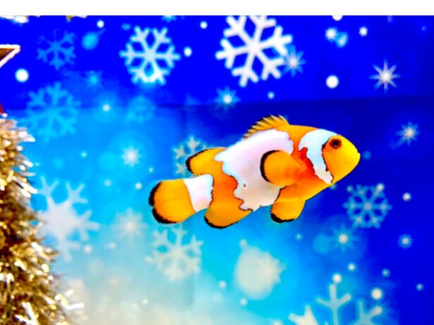 白い雪をイメージさせるスノーフレークオニキス